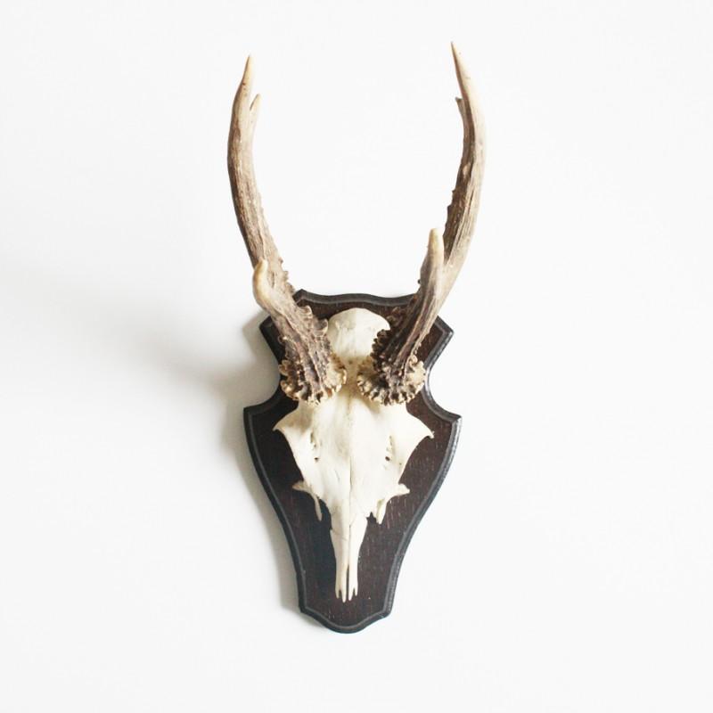 Gewei schedel for Gewei schedel